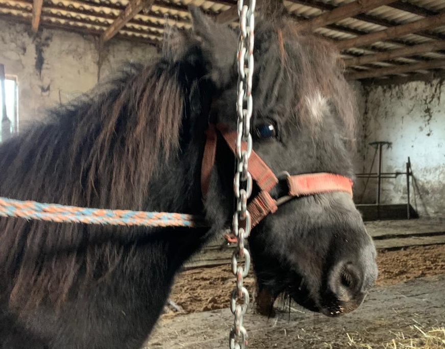 FIONA – końskie dziecko, prosi Cię o życie.